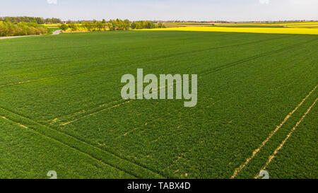 Green agriculture field at early spring. - Stock Image