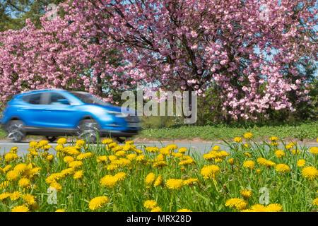 Speeding car through summer countryside - Stock Image
