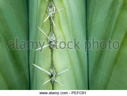 Close up of a cactus and thorns. - Stock Image