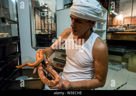 Karmei Yosef, Israel. 15th July, 2019. Israeli snake handler, breeder and catcher RAFAEL YIFRACH, 52, handles a Corn Snake in his home in Karmei Yosef. Yifrach has been intrigued by snakes since he was seven years old, he's been bitten by venomous snakes 18 times and currently grows and breeds some 300 non venomous snakes. World Snake Day is celebrated 16th July contributing to the cause of conservation of a sometimes dangerous but mostly misrepresented reptile. Credit: Nir Alon/Alamy Live News. - Stock Image
