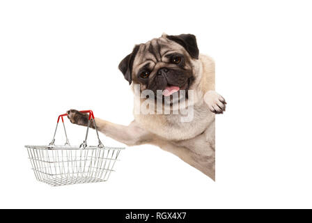 happy smiling pug puppy dog, holding up wire metal shopping basket,behind white banner, isolated - Stock Image