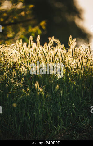 Green grass texture in sunlight - Stock Image