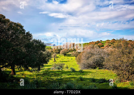 Park landscape of a meadow field with green grass, trees, blue sky and clouds at spring - Stock Image