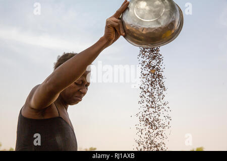 Kourono village,Yako province, Burkina Faso, Minata Guiguemde, 37,winnowing sorghum, grown on her family's farm. - Stock Image