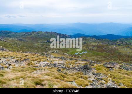 Native Australian forest vegetation in Kosciuszko National Park, NSW, Australia. Nature background with plants and vegetation. - Stock Image