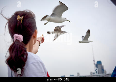 A woman seeing from hehind holding a piece of dried fish to feed seagulls, flying in the background. - Stock Image