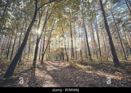 View of a path in a forest against the sun, color toning applied. - Stock Image