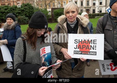 London, UK. 26th January 2019. London protest against the intended resumption of whaling by Japan.The Japanese government recently backed out of an international agreement banning commercial whaling. Campaigners rally at Cavendish Square for the march to the Japanese Embassy. Woman holding Shame Japan! Stop Whaling placard. Credit: Stephen Bell/Alamy Live News. - Stock Image