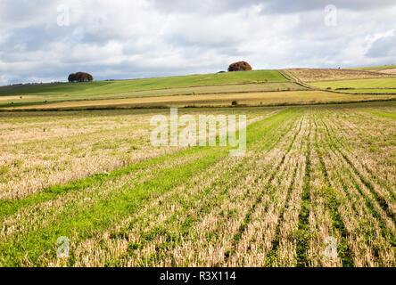 Rolling chalk landscape view towards the Ridgeway, Avebury Down, Wiltshire, England, UK - Stock Image