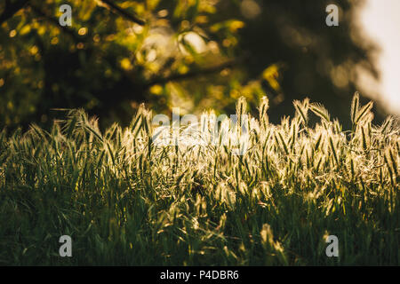 Green grass texture in sunlight. Vintage effect applied - Stock Image