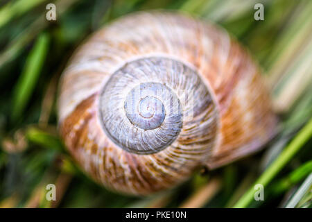 snail housing in grass - Stock Image