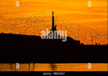 Aberystwyth Wales, UK. 09th Jan, 2019. UK Weather: On a clear cold evening, after a day of winter sunshine, flocks of tens of thousands of tiny starlings fly in huge 'murmurations' in the sky above Aberystwyth war memorial as they return from their daily feeding grounds to roost for the night on the forest of cast iron legs underneath the town's Victorian seaside pier. Aberystwyth is one of the few urban roosts in the country and draws people from all over the UK to witness the spectacular nightly displays. photo Credit: keith morris/Alamy Live News - Stock Image