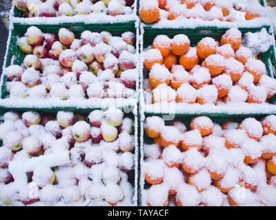 Snow covered crates of apples and oranges outside a greengrocers shop in Oslo Norway in the winter - Stock Image