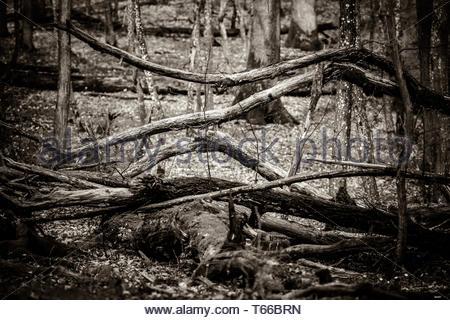 Wonderful Forest - Stock Image
