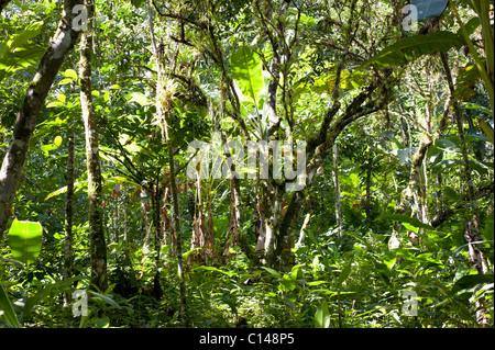Amazon Rainforest, Brazil, South America. - Stock Image