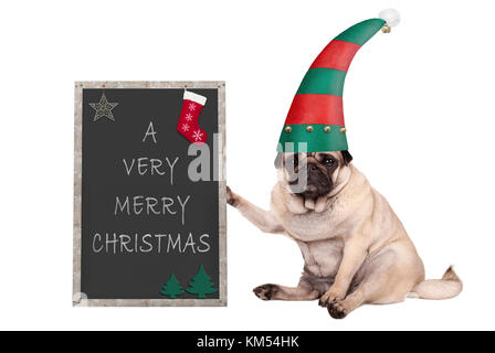 Christmas pug puppy dog sitting down, holding blackboardl, wearing elf hat isolated on white background - Stock Image