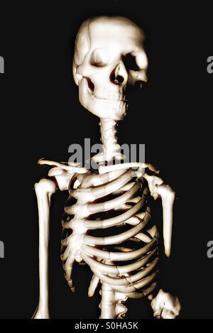 Bones - Stock Image