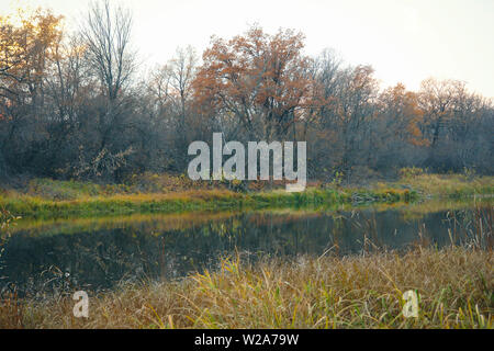 River or lake in early autumn in forest - Stock Image