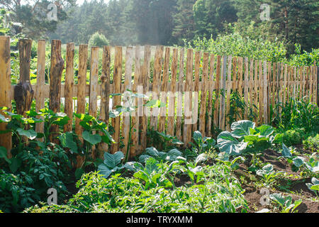 fenced vegetable garden in russian village on summer day - Stock Image