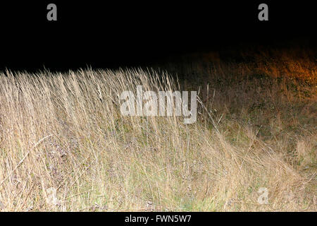 Night shot of grass with flash. - Stock Image