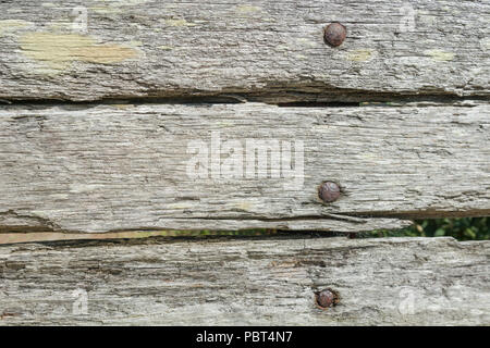 Decaying wood background texture in bright summer sunlight. - Stock Image