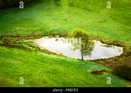 Lonely tree by a small pond on a green rural field in the spring seen from above - Stock Image