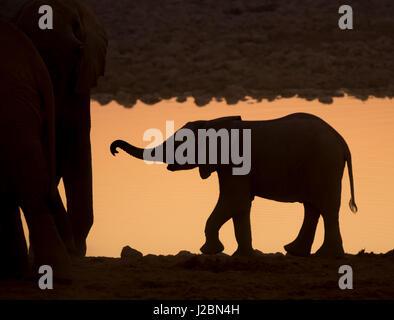 Africa, Namibia, Etosha National Park. Silhouette of baby elephant at sunset. Credit as: Wendy Kaveney / Jaynes - Stock Image