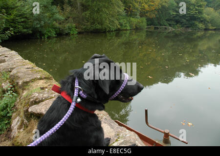 Black dog looking at water - Stock Image