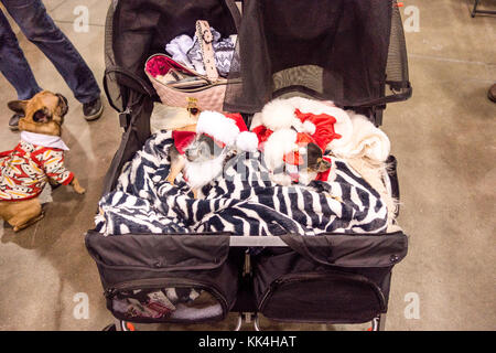 Two Chihuahuas dressed as Santa Claus in a stroller at the Canadian Pet Expo in Toronto Ontario Canada - Stock Image