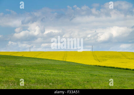 Farm field with crops. - Stock Image