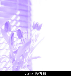 Spring tulips in bloom illustration in violet purple with white space copyspace for springtime, Easter, Mother's Day or other seasonal design elements - Stock Image