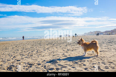 One little cute hairy brown dog mongrel mixed breed standing still on a sandy beach on a sunny day - Stock Image