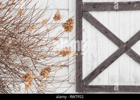 Dried Hydrangea and White Barn Door during Snow Storm - Stock Image