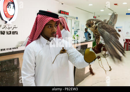 Young man showing his falcon in Falcon Hospital, Doha, Katar - Stock Image