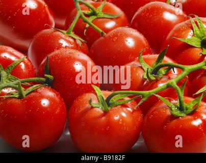 Fresh vine ripened tomatoes - Stock Image