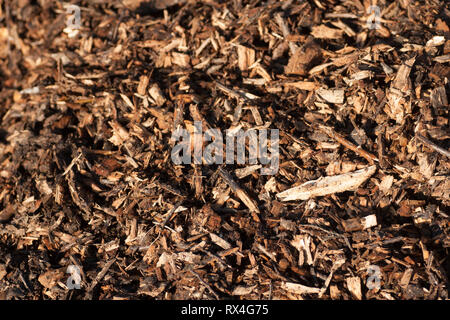 Natural bark mulch background texture - Stock Image