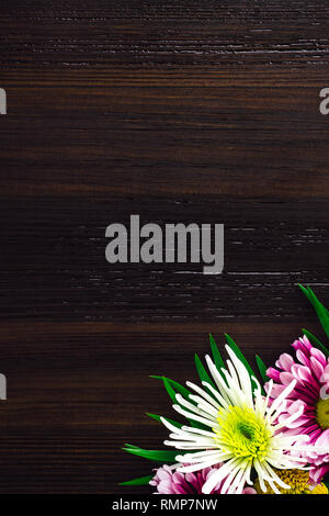 Mixed Chrysanthemums on Dark Wood with Space for Copy - Stock Image