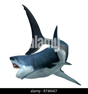 Great White Shark Tail - The Great White Shark can live for 70 years and is one of the largest predators of the oceans. - Stock Image