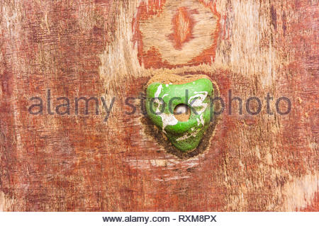 Green hand grip of a wooden climb wall. - Stock Image