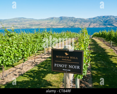 Pinot Noir vines at the Mission Hill winery in the Okanagan Valley British Columbia Canada - Stock Image