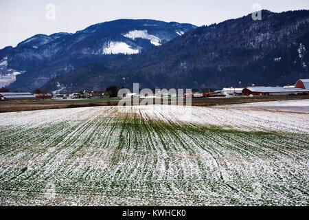 Farmland in Fraser Valley, British Columbia - Stock Image