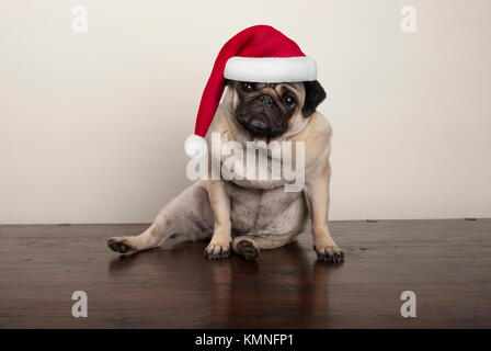 cute Christmas pug puppy dog wearing santa claus hat, sitting down on wooden floor - Stock Image