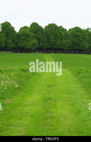 A recently mown footpath leads across a field near the north Oxfordshire village of Hook Norton - Stock Image