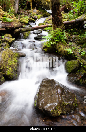 Water falls down towards the trail on a forest hike - Stock Image