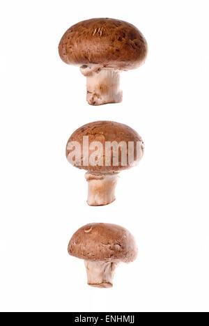 Three mushrooms on white background close up. - Stock Image
