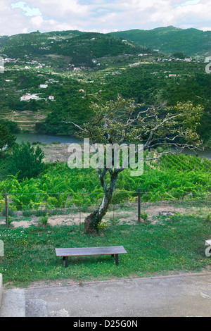 A bench and a tree with the Douro river behind - Stock Image