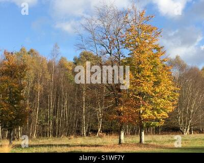 Autumn colours on trees at Paultons Golf course near Romsey, Hampshire, UK - Stock Image