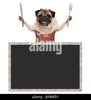 sweet smiling pug puppy dog holding cutlery for eating meal and wearing leather apron, with blank blackboard sign, - Stock Image