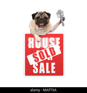 happy pug puppy dog hanging with paws on red house sold sign holding up house key, isolated on white background - Stock Image