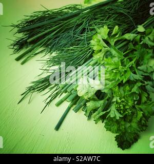 Herbs on a green background. - Stock Image